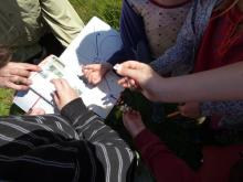 Children ages 7-14 identify a plant in a Nature Studies program.